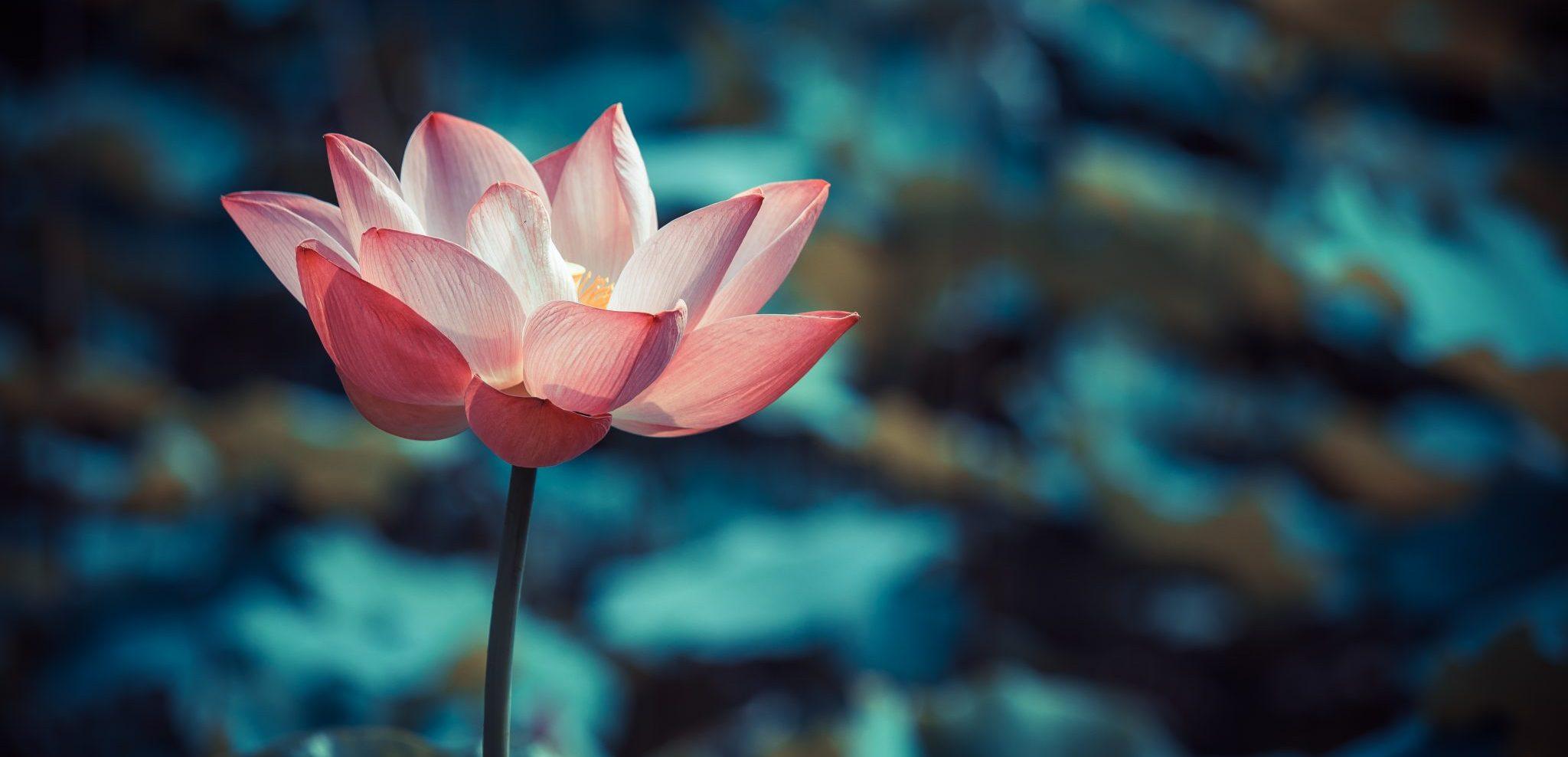 Best Yoga Poses For Meditation Meditation Postures For Your Health