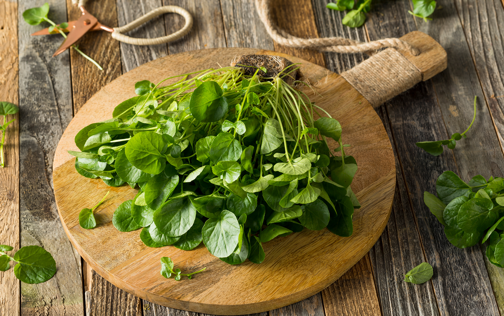 Leafy greens and herbs
