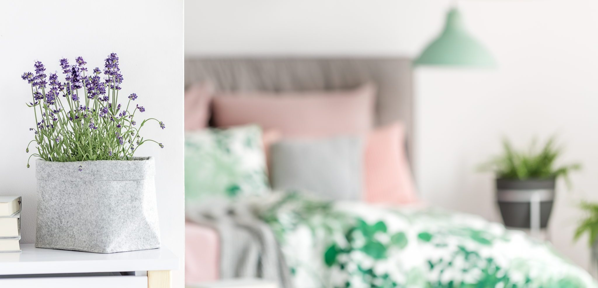 Indulge in Nature's Care: Bedroom Plants for Better Sleep