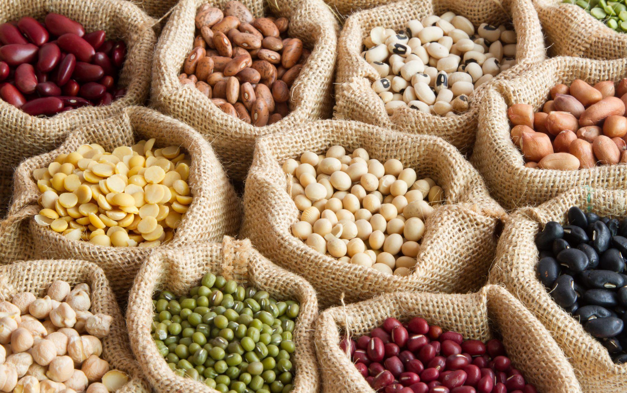 protein legumes