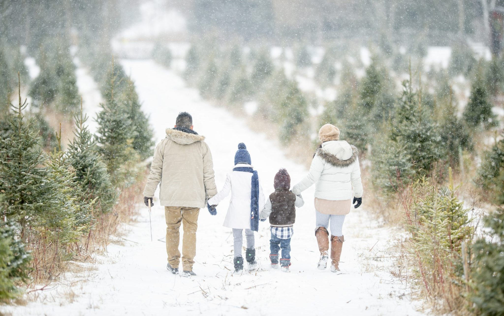 stroll Christmas
